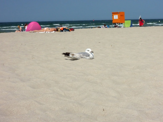 Möwe in Warnemünde